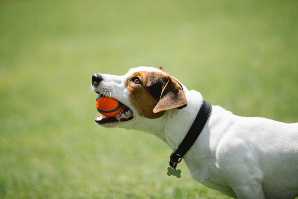 best training collar for small dogs